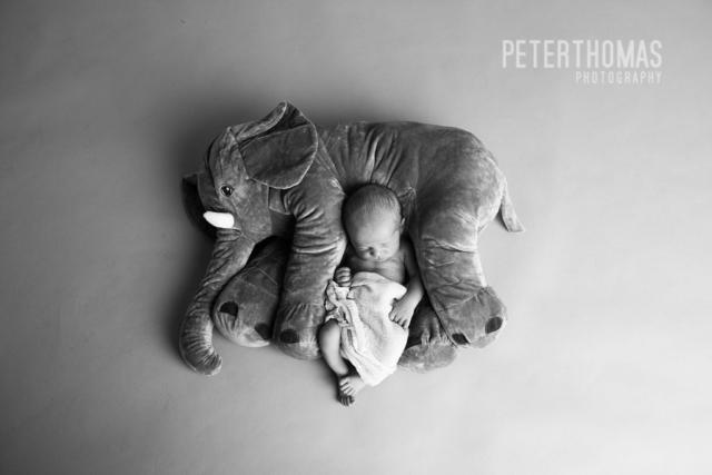 elephant, small scale, baby, newborn